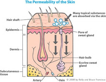 Skin permeability is a key factor in how toxic ingredients invade our bodies and cause toxic exposure.
